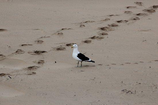 Wilderness, Sudáfrica: On the Beach