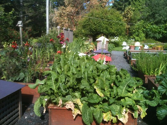 Coupeville, واشنطن: Fabulous outstanding garden with amazing lilies, flowers, herbs...