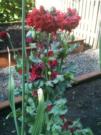 Coupeville, WA: Amazing well loved and tended garden. Hummingbirds, beautiful flowers...