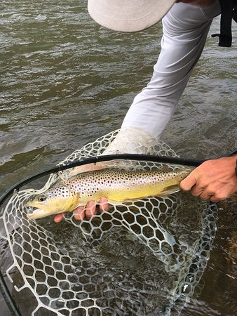 Vail Valley Anglers: photo4.jpg