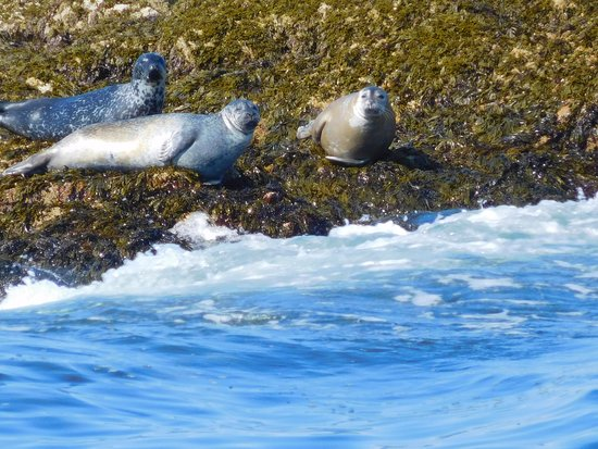 Milbridge, ME: Some of the seals that we saw.