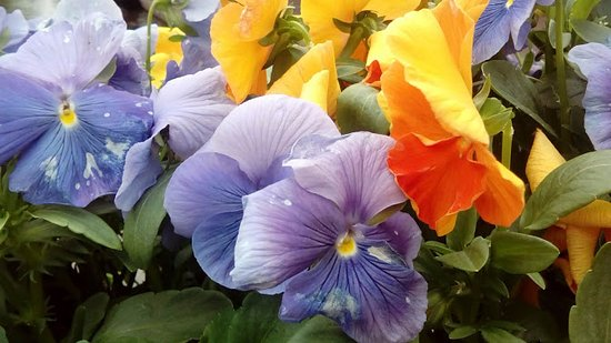 Flores preciosas fotografa de Jordaan msterdam TripAdvisor