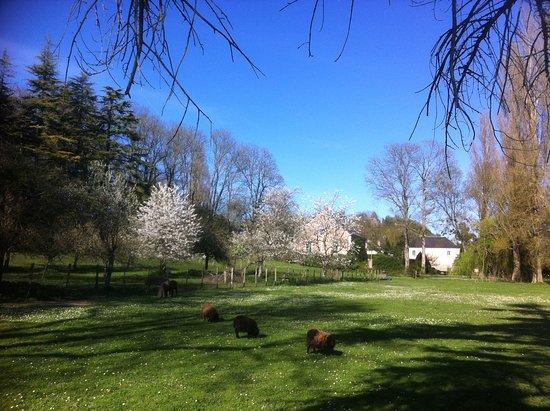 Troo, France: prairie du moulin
