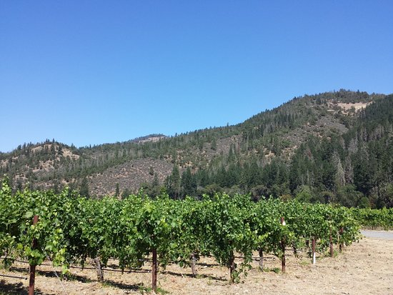 Cowhorn Vineyard