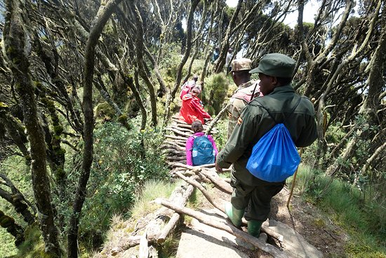 Mount Sabinyo: Going up and down is the same way