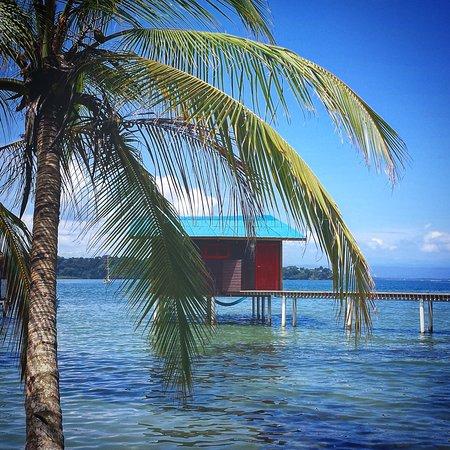 The Sea Monkey Sea & Tree Lodge