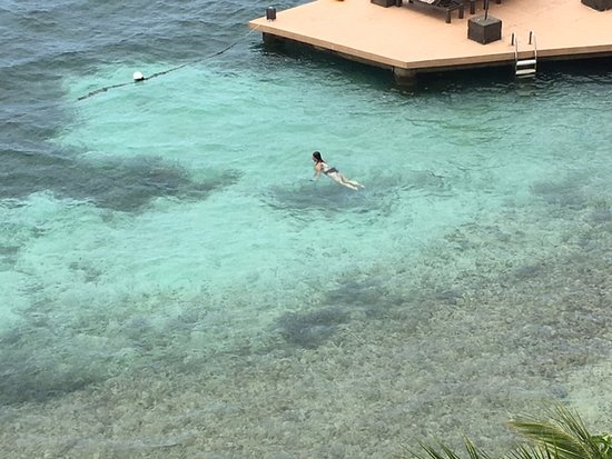 Moxons Beach Club: Amazing snorkeling closer to the reef. Wear a life jacket if you go out far so that boats can se