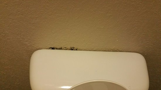 mold behind the toilet tank lid picture of super 8 by wyndham rh tripadvisor ie