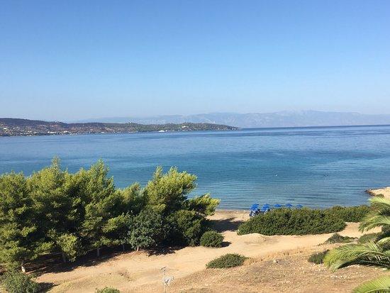 Ermioni, Grecia: Το δασάκι και μέρος της παραλίας Λεπιτσας, όπως φαίνεται απο το ξενοδοχείο...