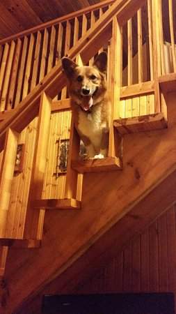 Great Escape Cabins - Hocking Hills Cabins of Choice : Our Corgi enjoying his stay.
