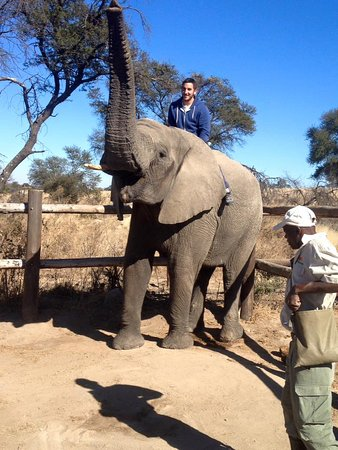 Gweru, Zimbabwe: The elephant ride, AMAZING!