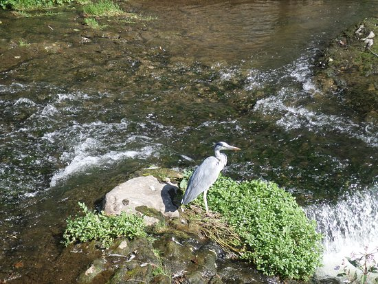 Newcastle West, Irland: Expert fisherman - River Arra