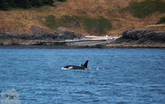 Friday Harbor, WA: whale