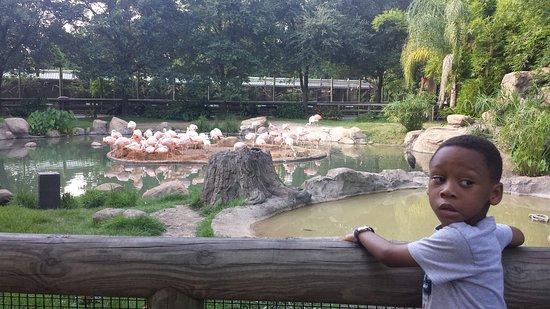 Houston Zoo : 20160802_182145_large.jpg