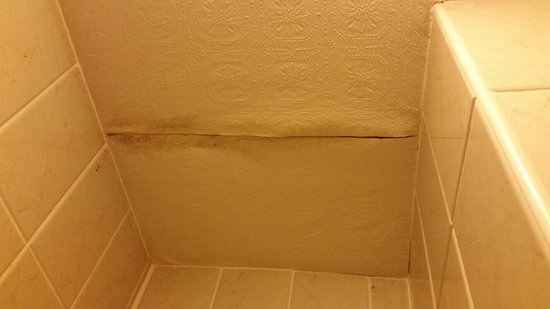 Shower module ceiling_large.jpg - Picture of The Manor Country House ...
