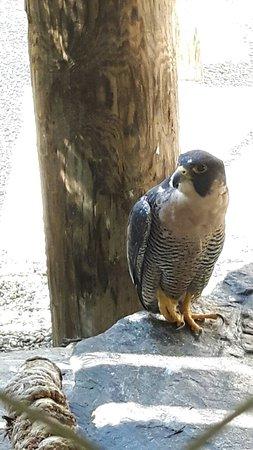 Quechee, VT: VINS Nature Center
