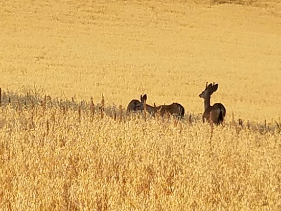 The Canyon Villa: Deer grazing in the field - view from our balcony