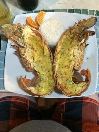 Miconia : excellent lobster