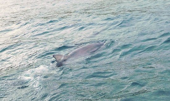 Cromarty, UK: The dolphins were beside and under our boat.