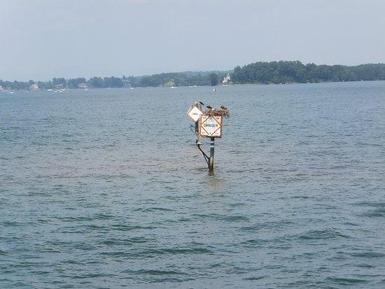 Moneta, VA: Osprey nests