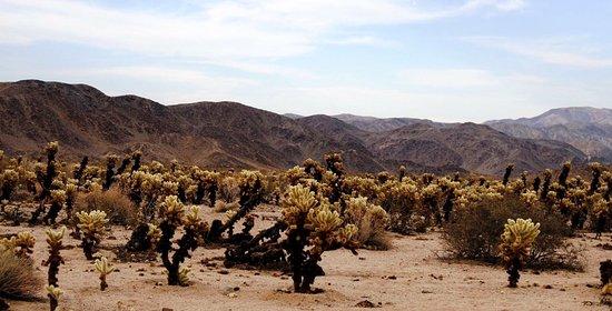 Twentynine Palms, Califórnia: photo1.jpg