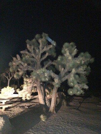 Twentynine Palms, Califórnia: photo5.jpg