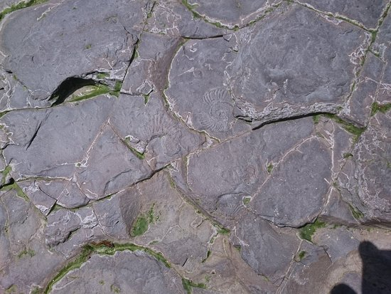 Kimmeridge, UK: fossils