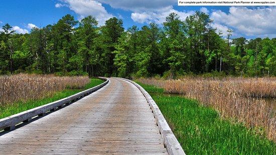 Road through Jamestown Island