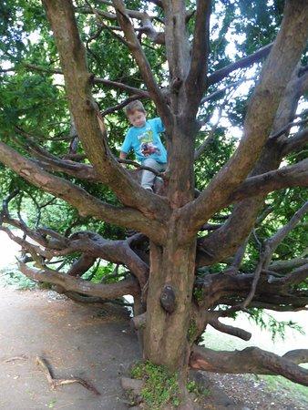 Forge Dam Park: tree climbing