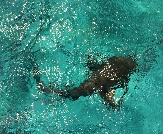 Triton Undersea Adventures