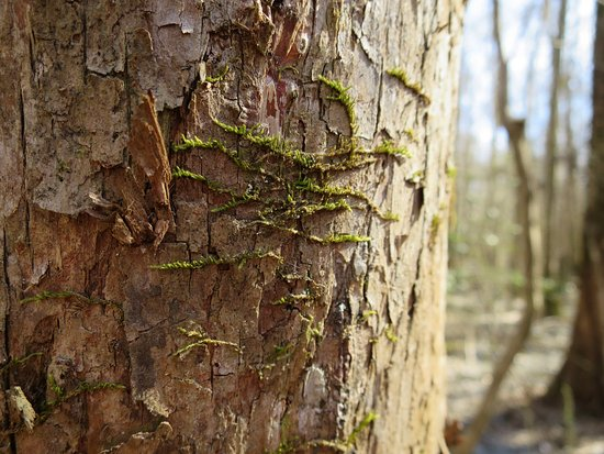Suffolk, VA: Moss on a tree