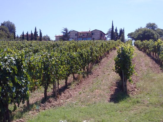 Снимок Agriturismo La Pietriccia