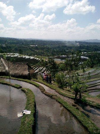 The Bali Activities