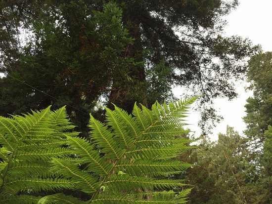 Fern Grove Cottages: Fern Grove means -- a grove of ferns under the redwoods!