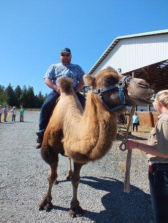 camel safari bellingham 2019 all you need to know before you go rh tripadvisor com