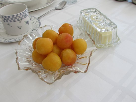 Beside The Winery: apricot from backyard