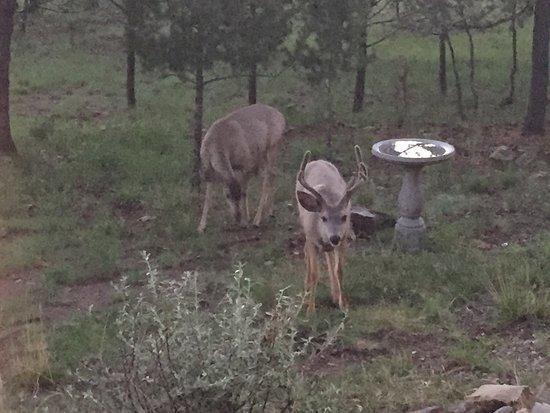 La Junta Guest Ranch: photo0.jpg