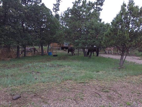 La Junta Guest Ranch: photo1.jpg