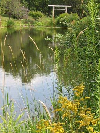 Ellicottville, NY: Pond