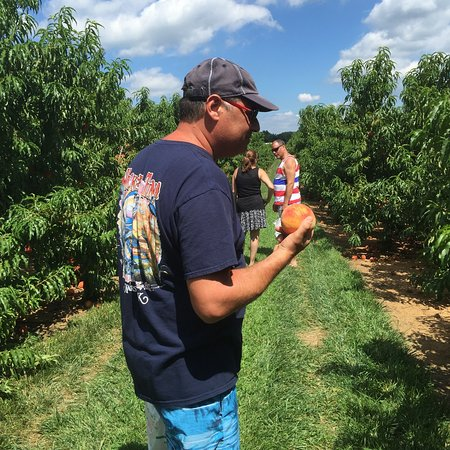 Colts Neck, NJ: Great day out picking peaches, cantaloupe and watermelon