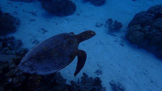 Makunudu Island: photo0.jpg