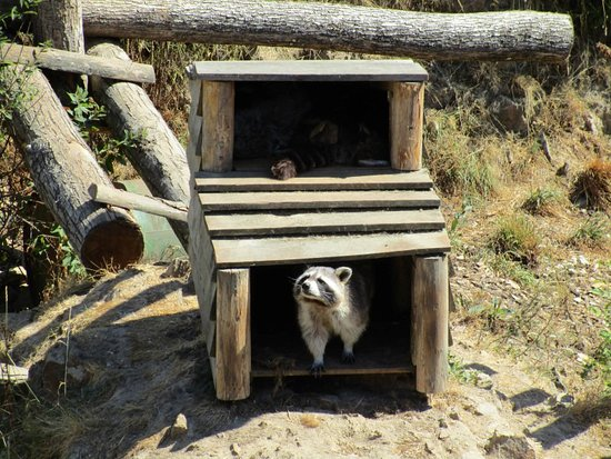 Parc Animalier d'Ecouves