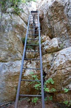 Sentier de l'imbut : Sentier Vidal (le retour)