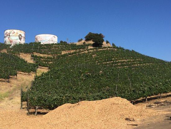 Malibu Family Wines: photo1.jpg