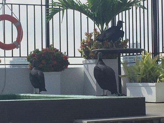 Hotel Monterrey: Deck y pileta con visitas especiales