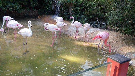 Fenicotteri Rosa Foto Di Giardino Zoologico Di Pistoia