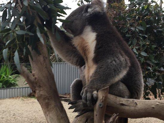 Seddon, ออสเตรเลีย: photo0.jpg