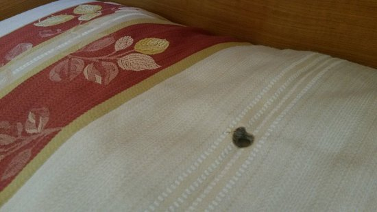 Pensiunea Moldotour: Poor room quality for this price...