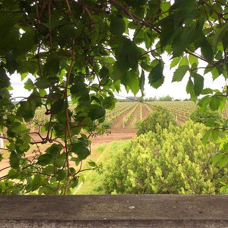 Óblast de Odesa, Ucrania: Виноградники TM Grande Vallee