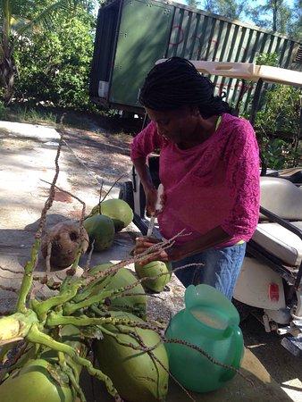 Bimini: Fresh coconuts  Snorkeling and fishing Feeding stingrays